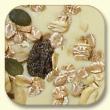 MyMuesli Rockin Nuts auf weißer Schokolade